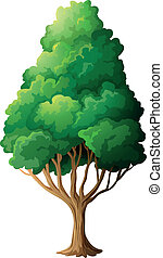 A tall old tree - Illustration of a tall old tree on a white...