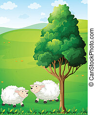 Two sheeps near the tree
