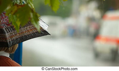 Rainy day at the bus stop - People with umbrellas waiting at...