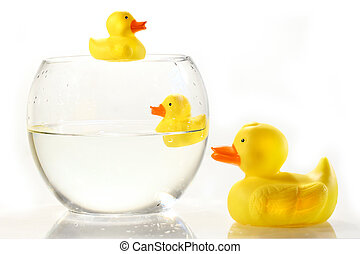 Rubber ducks in fish bowl against white background