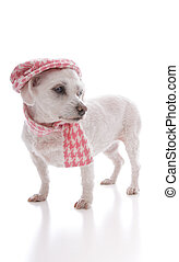 Trendy dog wearing cap and scarf