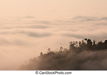foggy tropical forest landscape in malaysia