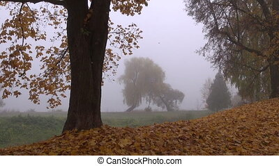 park landscape with tree and mist