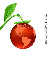 Globe fruit