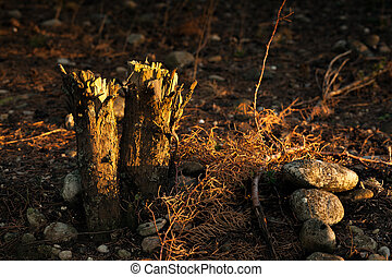 Two Chopped Tree Trunks at Dawn