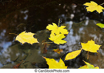 leaves floating in the water