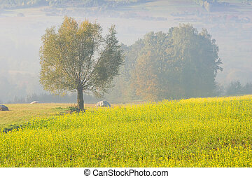 Landscape with a lone tree in fog