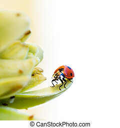 Ladybird on desert flower. Closeup with space for your text.