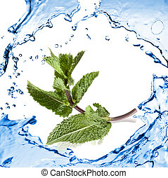 green mint with water splash isolated on white