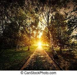 Autumn, fall park. Wooden path towards the sun. Colorful...