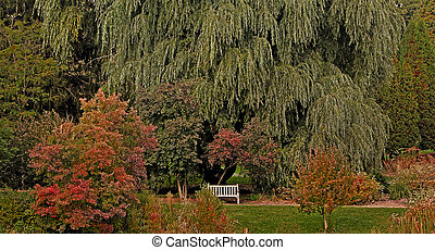 Autumn Park Landscape - A wooden bench sits in a peaceful...