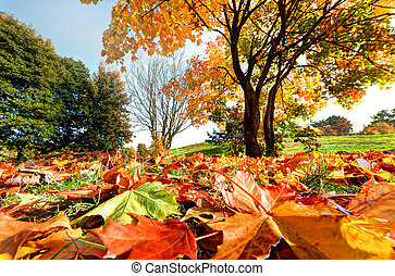 Autumn, fall landscape in park Colorful leaves, sunny blue...