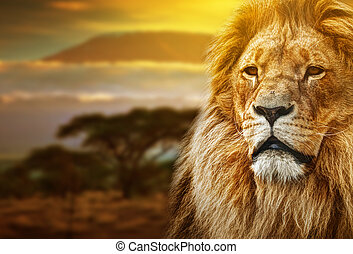 Lion portrait on savanna landscape background and Mount...