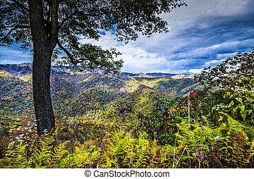 Smoky Mountains - Autumn in the Smoky Mountains National...