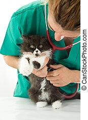 veterinario, gatito