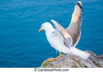 Sea gull at a beach near Gibraltar.