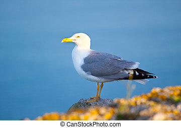Sea gull at a beach near Gibraltar.