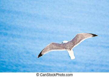Sea gull - Flying sea gull at a beach near Gibraltar.
