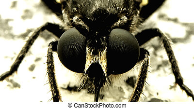 Closeup detail of fly with big eyes.