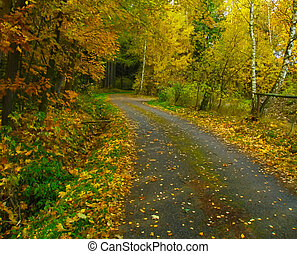 Autumn landscape - Colorful autumn landscape with trees...