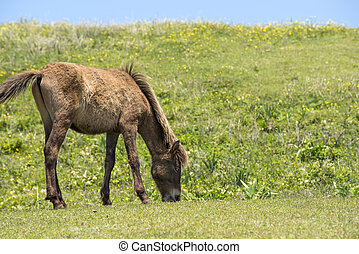 Grazing young horse in front of green hill