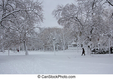 Winter at the Cambridge Common - Cambridge Common park near...