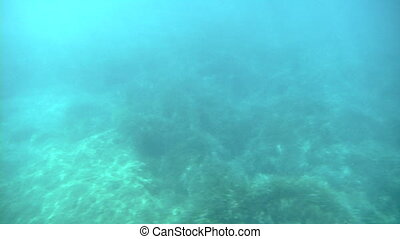 sea under - Underwater view