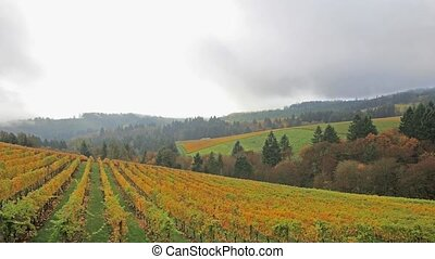 Vineyard in Autumn Dundee Oregon - Vineyard Plantation with...