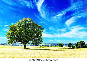 tree and field - tree and wheat crops plant field in summer...