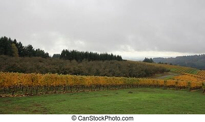Vineyard with Autumn Fall Colors - Vineyard Plantation with...