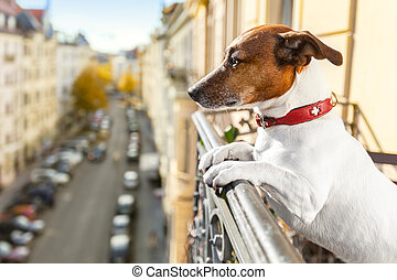 nosy watching dog form top of balcony