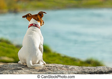 dog watching  - dog thinking and watching about the future