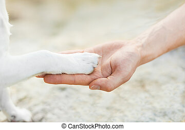 high five paw  - dog with paw high five and hand of owner