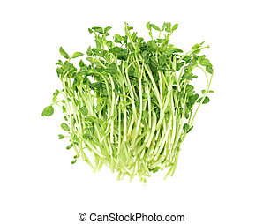 Fresh Pea Sprouts - Bundle Of Fresh Pea Sprouts Lying On...