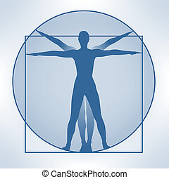 leonardo proportions - a blue illustration showing the...
