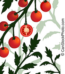 Botanical Tomato Branch with Sliced Section Plant - Vector...