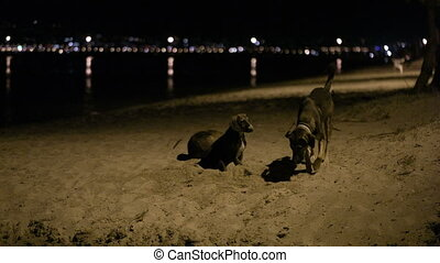 Three stray dogs in the beach by night with one digging a...