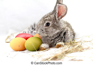 Gray rabbit - Cute gray rabbit with Easter eggs isolated on...