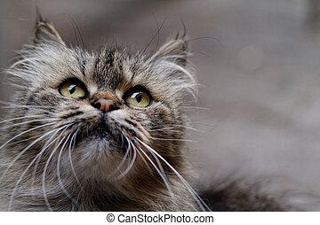 Cat portrait - Cat close up photo. Animal portrait