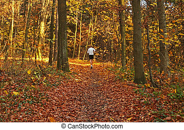 jogger in forest - joeer in autumn forest