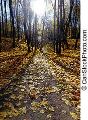 Autumn in park