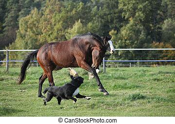 dos, caballos, Funcionamiento, pasturage