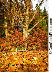 Autumn landscape with bench under oak tree