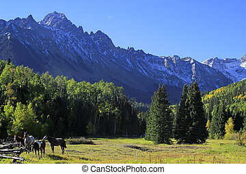 American quarter horse in a field, Rocky Mountains,...