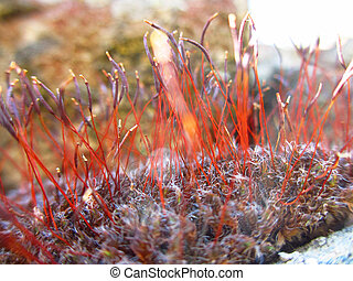 Mosses on a mountain rock - Extreme close up of mosses...