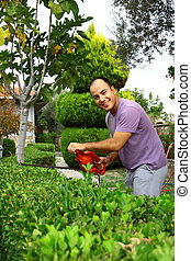 man pruning shrub with tool in garden - man pruning shrub in...