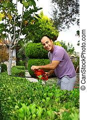 man pruning shrub with tool in garden - man pruning shrub in...
