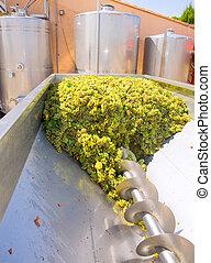 chardonnay corkscrew crusher destemmer in winemaking