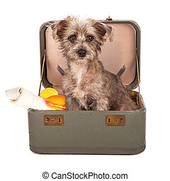 Terrier Dog in Suitcase - A small breed dog in a travel case...