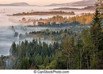 Forest and View During Morning Fog - Morning fog in the...